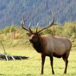 トナカイと鹿の大きさや違いについて