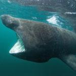 ウバザメの大きさや特徴について
