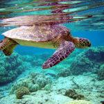 アオウミガメの呼吸はどうやって行っているの!?