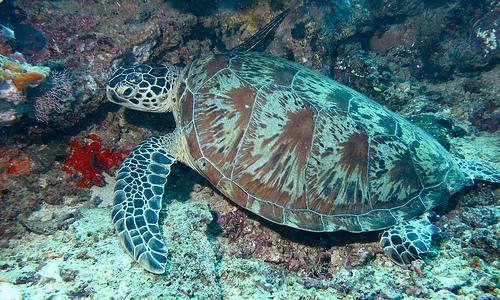 アオウミガメ 産卵 産卵地