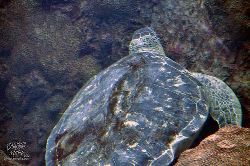 ウミガメ 産卵 世界