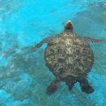 ウミガメの保護の理由や方法について