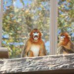 日本でキンシコウが見られる動物園は一体何処にある!?