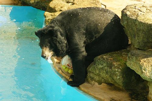 ツキノワグマ 冬眠 動物園