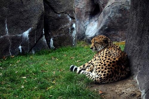 チーター 赤ちゃん 日本 動物園