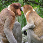 日本でテングザルに会える動物園って一体どこ!?
