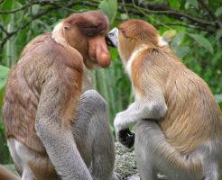 テングザル 日本 動物園