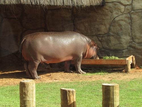 カバ 食べ物 動物園