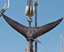 クロマグロ 漁獲量 規制