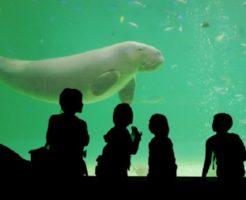 ジュゴン 水族館 世界 日本