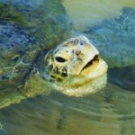 ウミガメが産卵の時に流しているのは涙の正体は?実は塩分!?