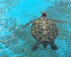 ウミガメ 保護 理由 方法
