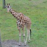 キリンの頸髄の大きさや数ってどれくらい!?